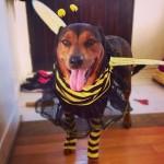 Romie on Halloween